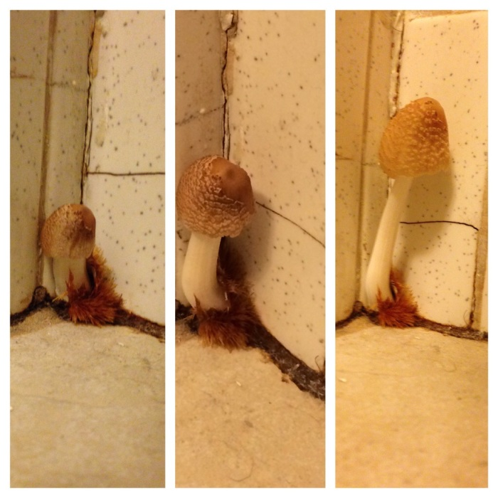 The progression of our mushroom's growth in one day